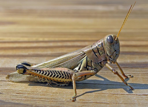 fintWN_insecto2