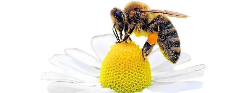 abejas0