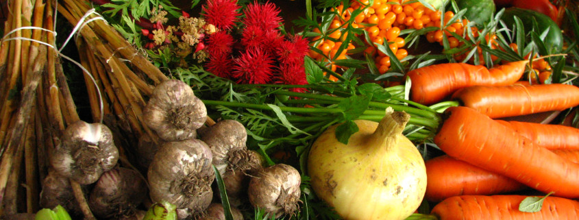 Ecologically_grown_vegetables-copy1