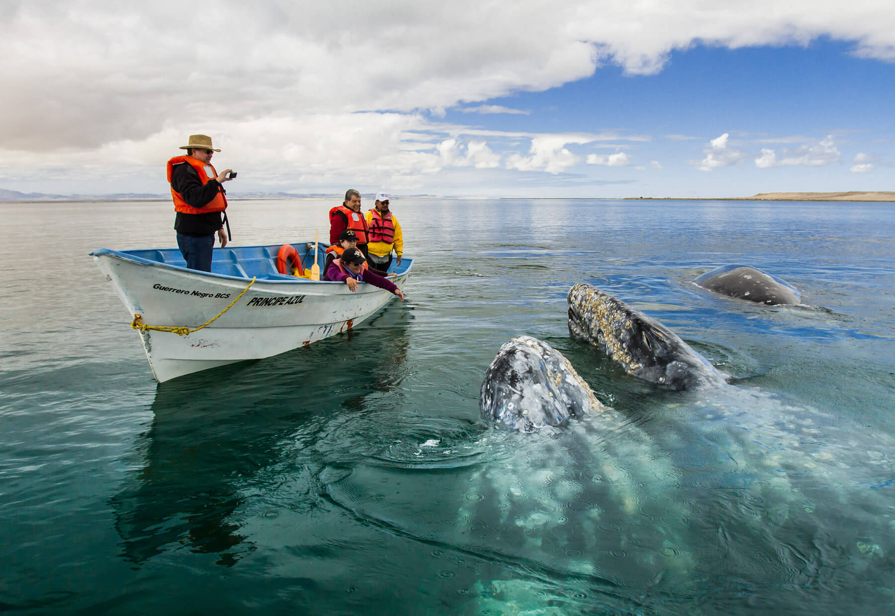 Whale-Watching-Baja