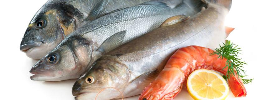 ryby-clanokW